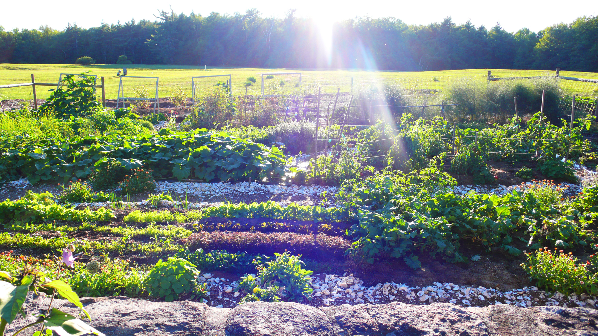 growing food in chemical free soil where there is a harmonious balance between minerals compost and effective micro organisms resulting in optimum nutrient